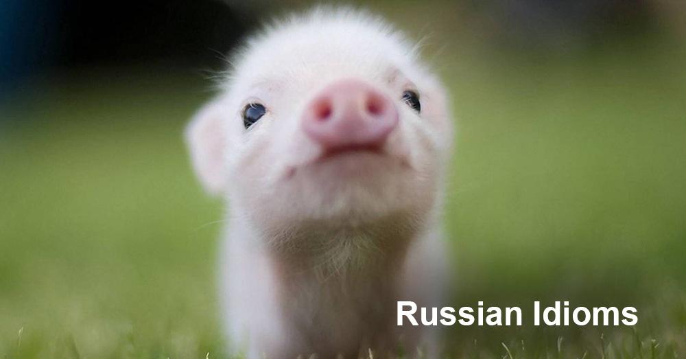 Russian Idioms