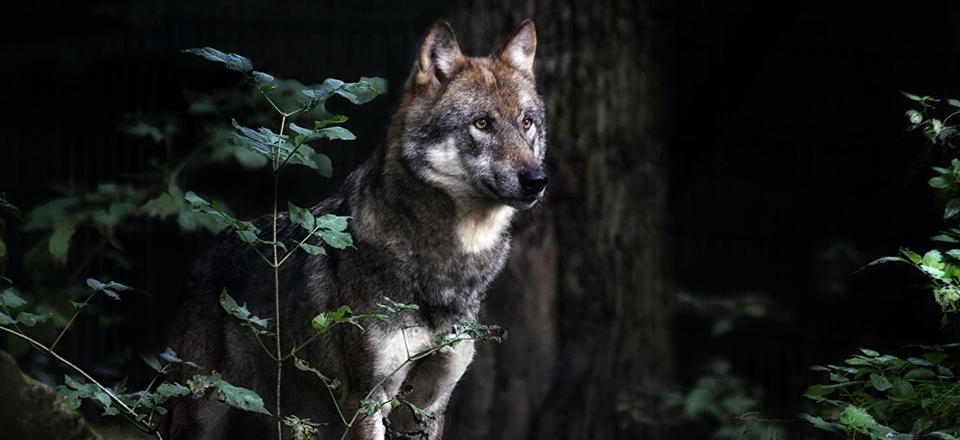 """""""Волков бояться - в лес не ходить!"""""""