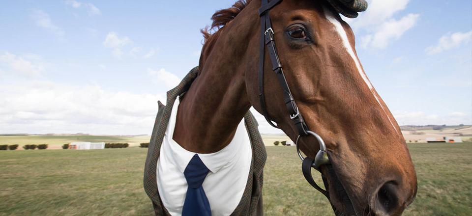 """""""Дарёному коню в зубы не смотрят"""""""