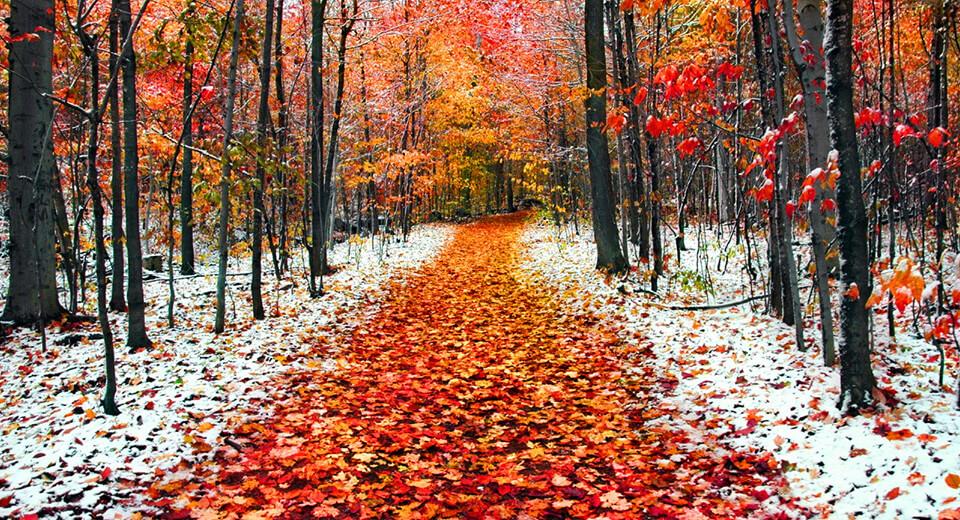 В ноябре зима с осенью борется.