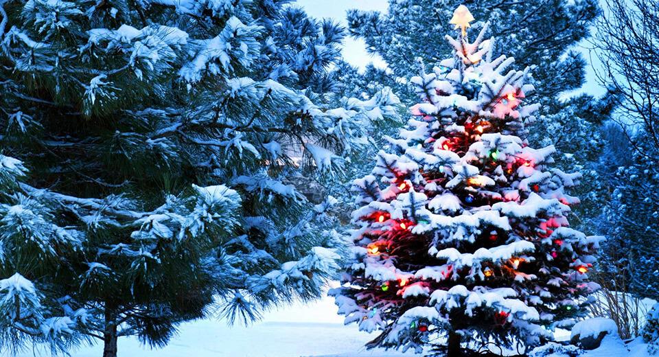 Декабрь снежный и холодный — будет и год плодородный.