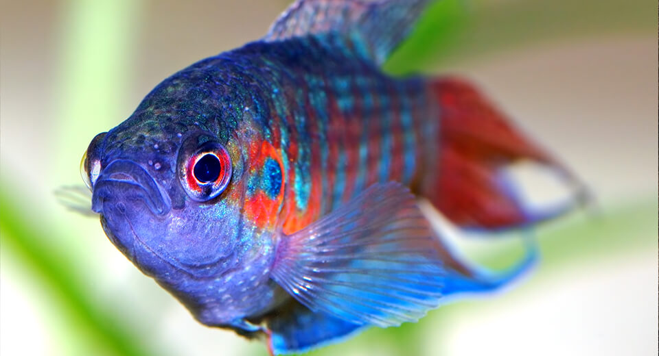 Молчать как рыба