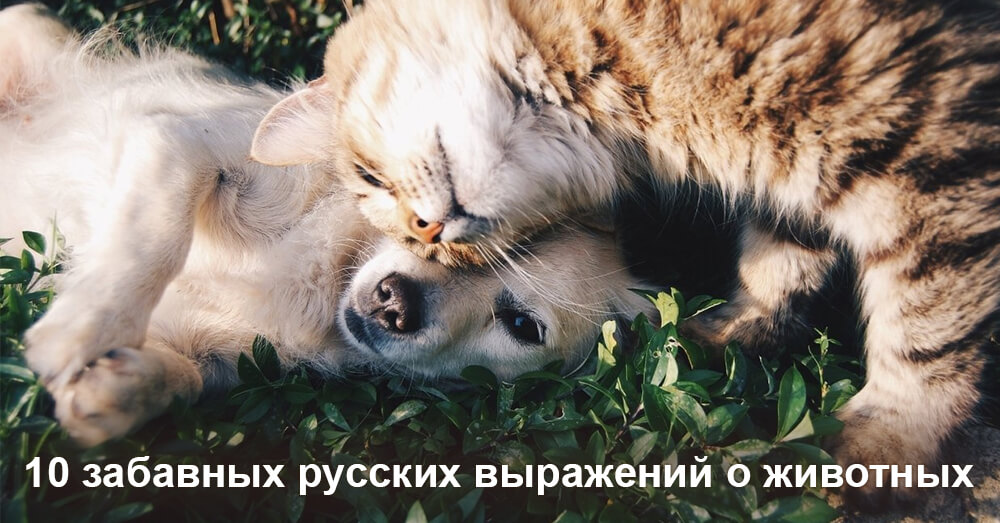 10 Fun Russian Phrases about Animals