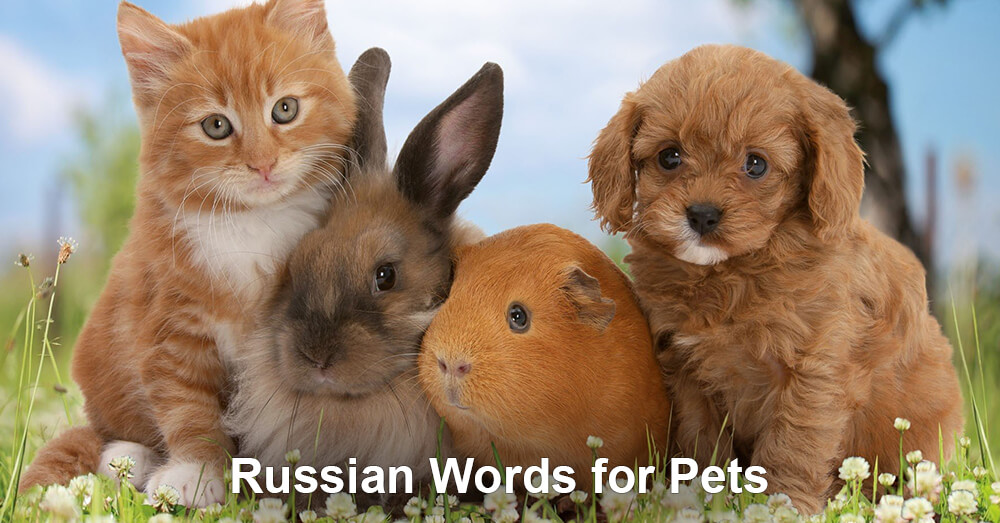 Russian Words for Pets