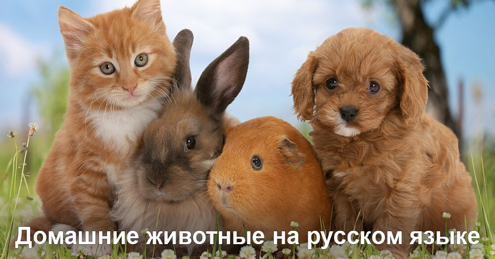 Домашние животные на русском языке